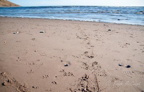 Conrads Beach Nova Scotia