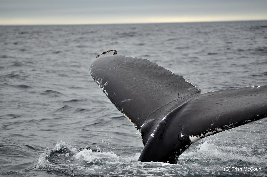 Brier Island Whale and Sea Bird Cruises