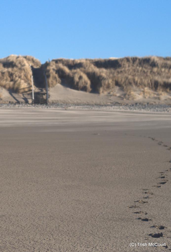 Winter NS Beach 2